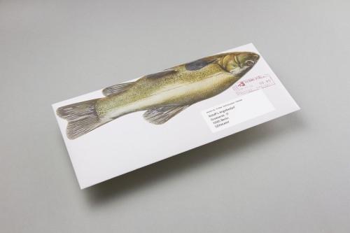 Manuel Knill - Das Marttiini Fisch Mailing 3