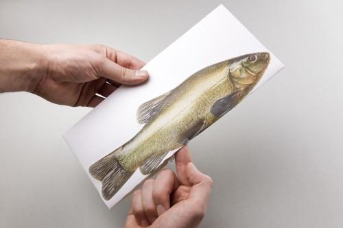Manuel Knill - Das Marttiini Fisch Mailing 4